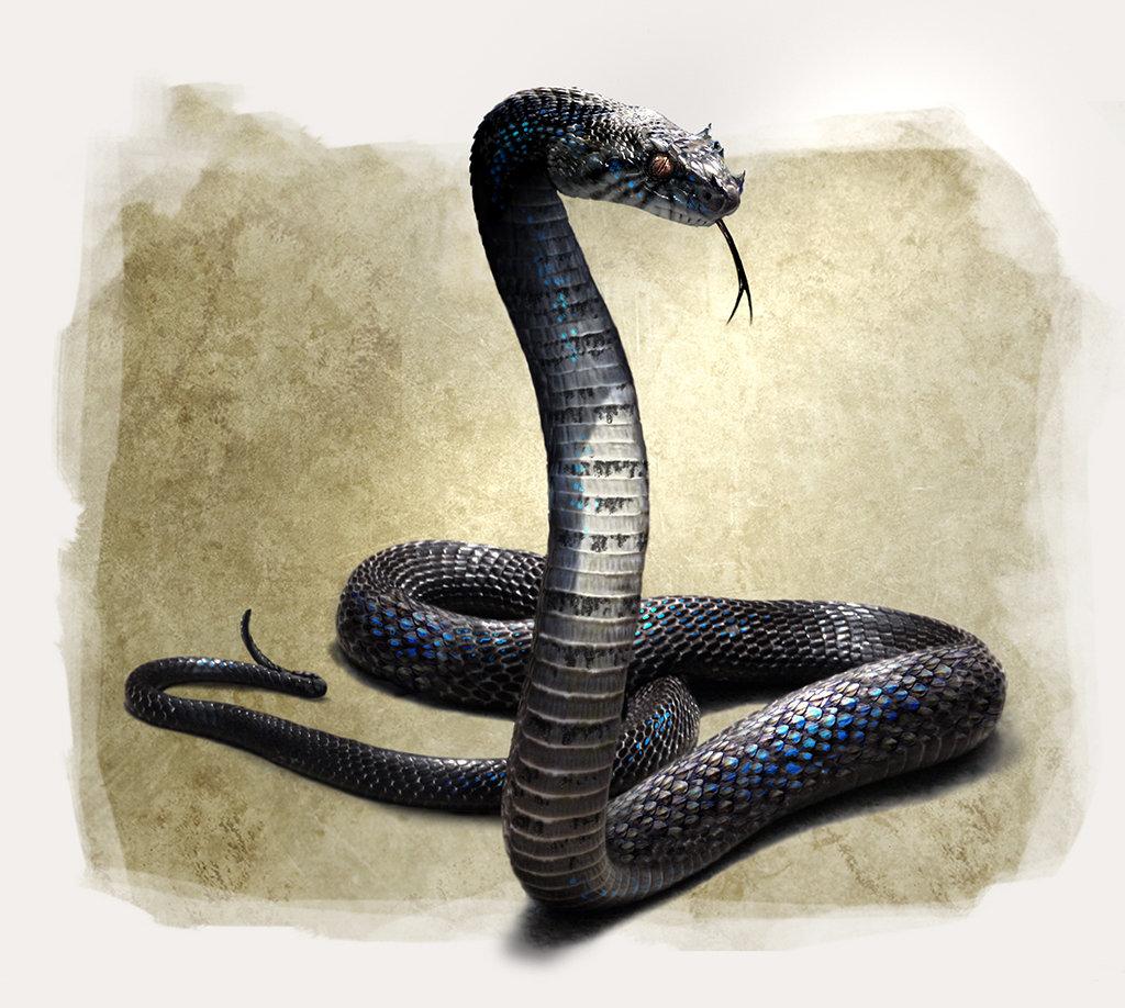Daren horley fs viper body1