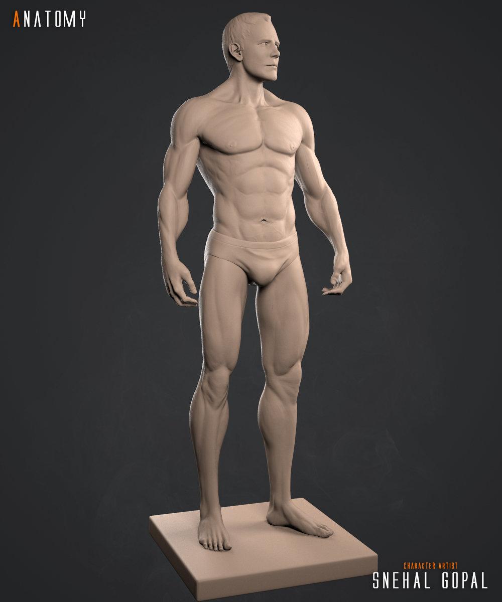 Snehal gopal anatomy clay front02