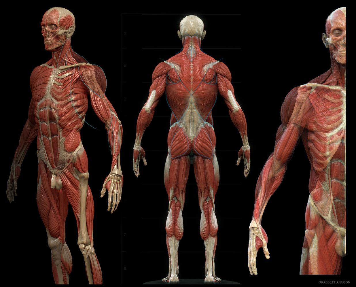 переворот картинки мышцы человека руками вербену выращивают кашпо