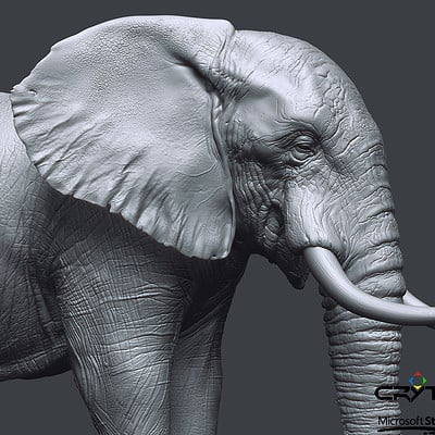 Bruno camara elephant high close