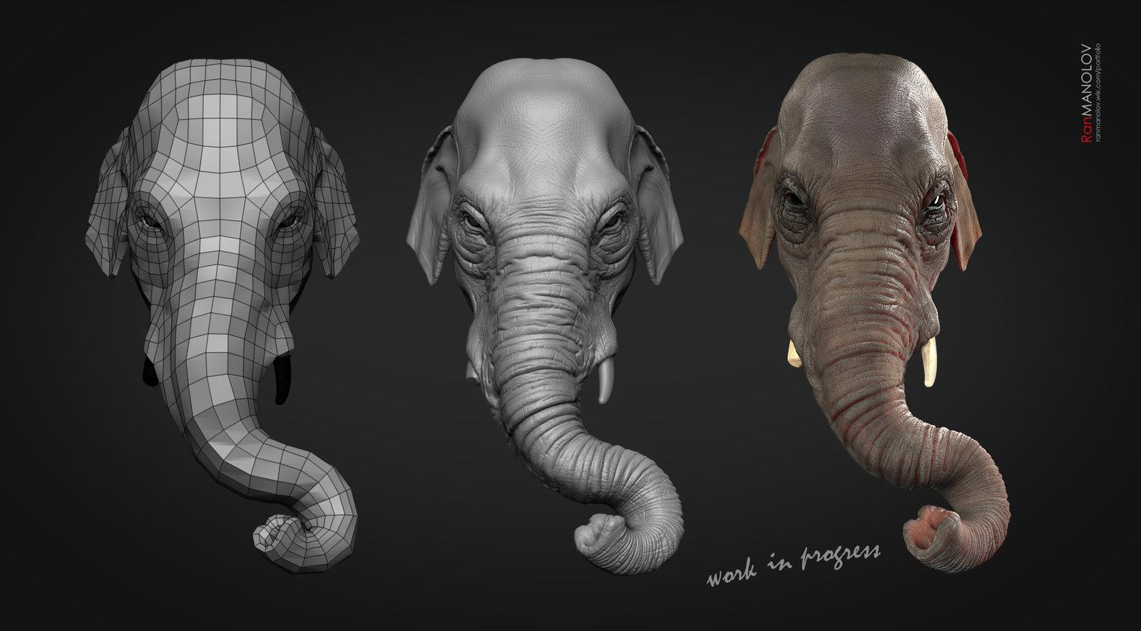 Elephant Study Wip
