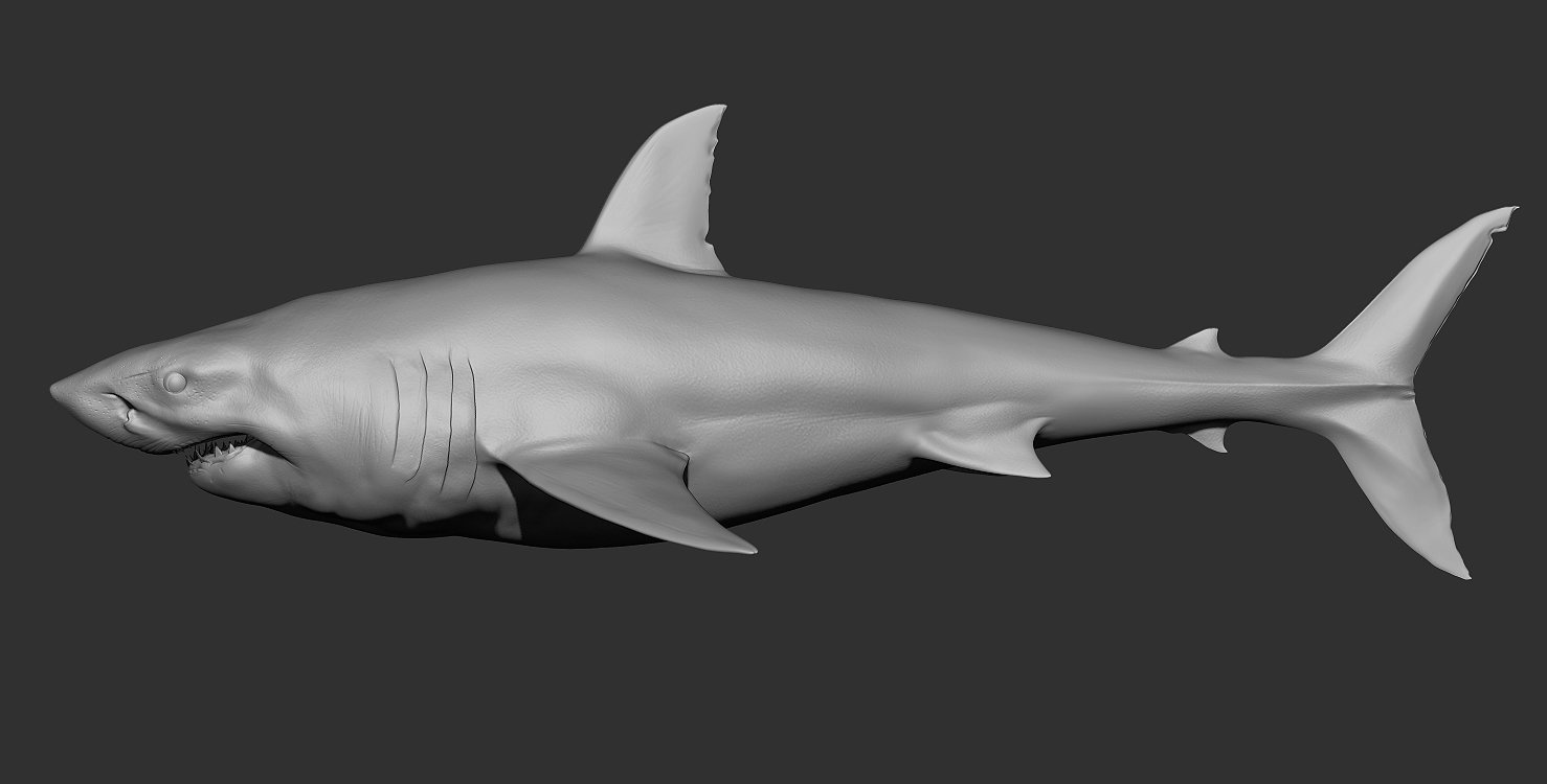 Great white shark and the seal - WIP