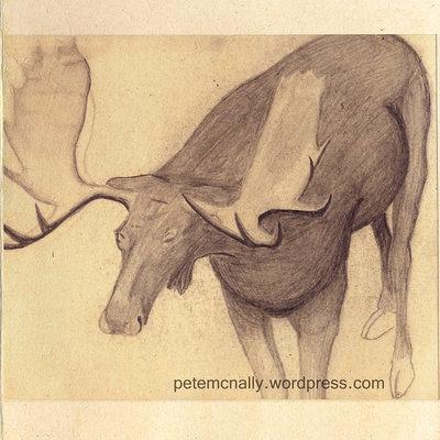 Pete mc nally sketch pencil nathistmuseum elk