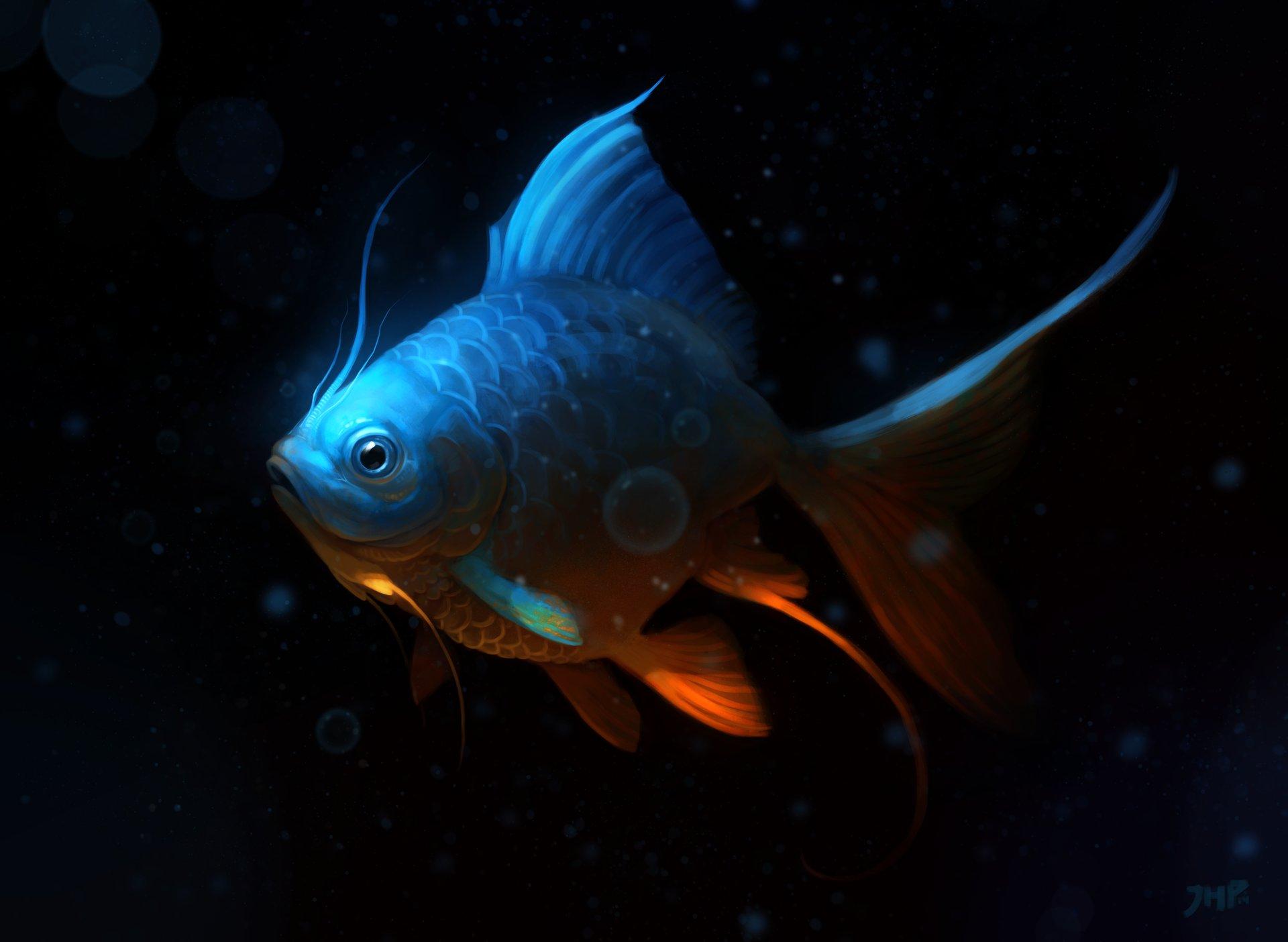Joao henrique pacheco peixe 2
