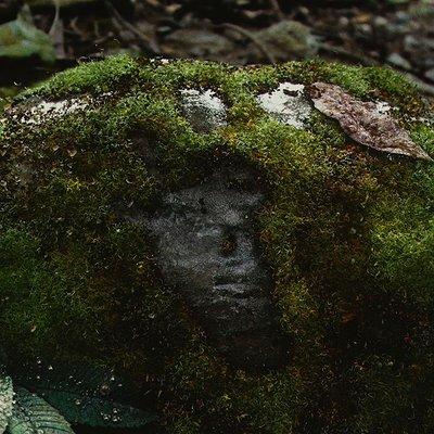 Nika maisuradze blender moss lowdof