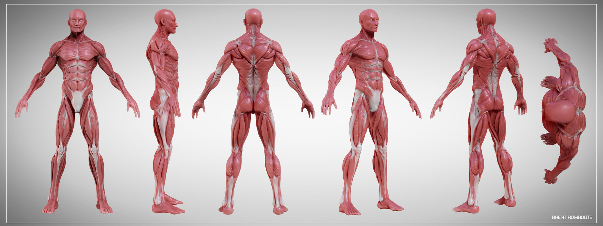 ArtStation - Anatomy Study with turntable, Brent Rombouts
