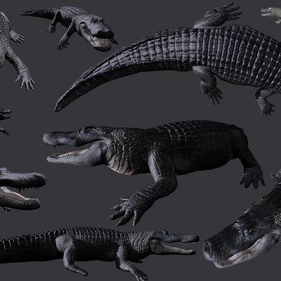 Zeke garcia alligator shots 1