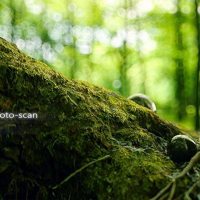 Christoph schindelar nature macro 1