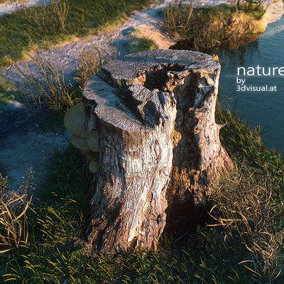 Christoph schindelar tree stump 2
