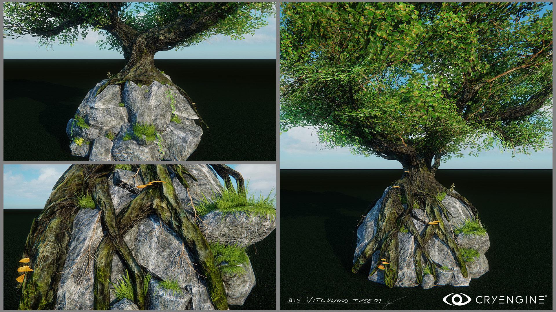 Lukas kolz tree