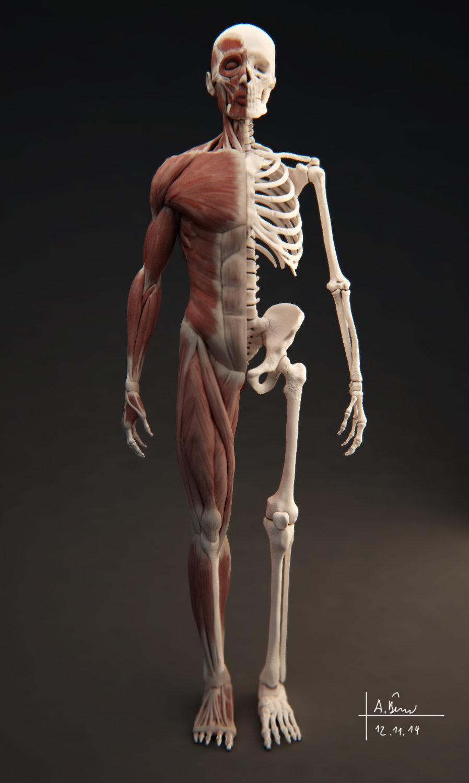 Charmant Interaktive 3d Anatomie Ideen - Menschliche Anatomie Bilder ...