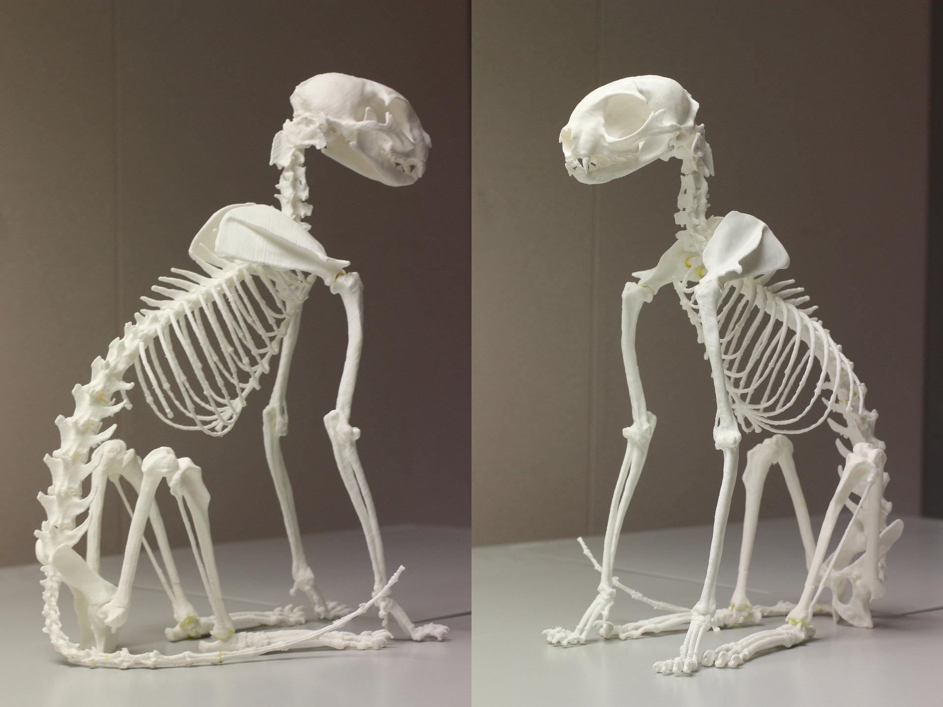 jonathan seeney - 3d printed cat skeleton