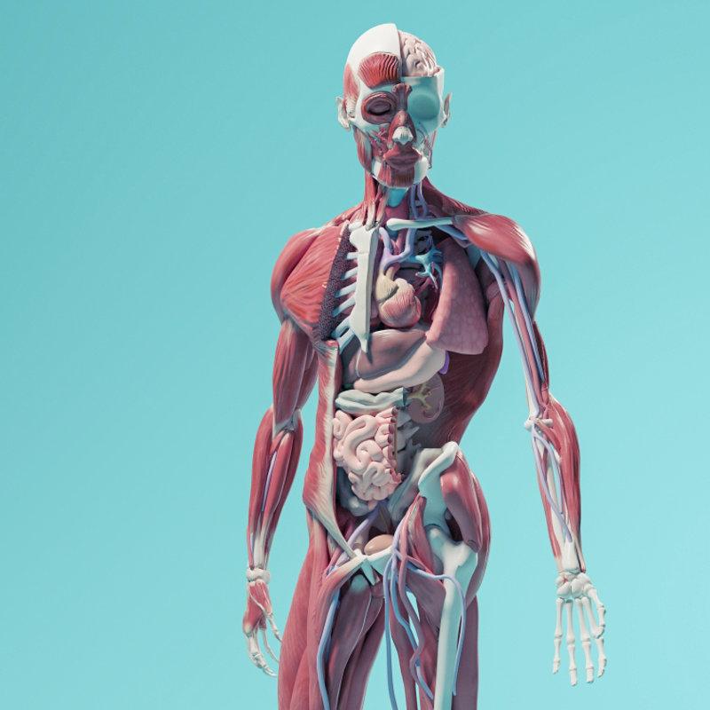 Anatomie Spiegel
