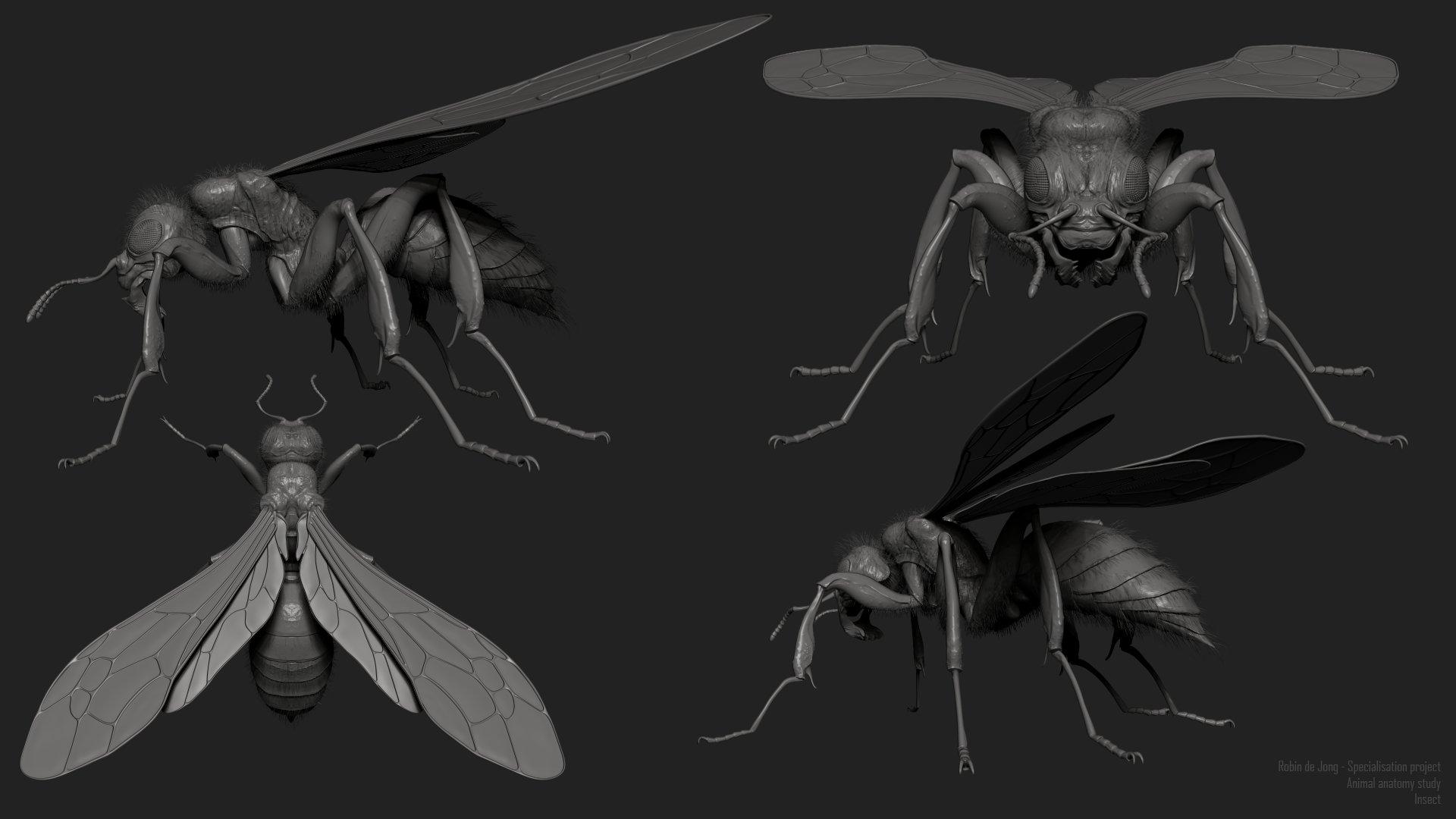 ArtStation - Insect research, Robin de Jong