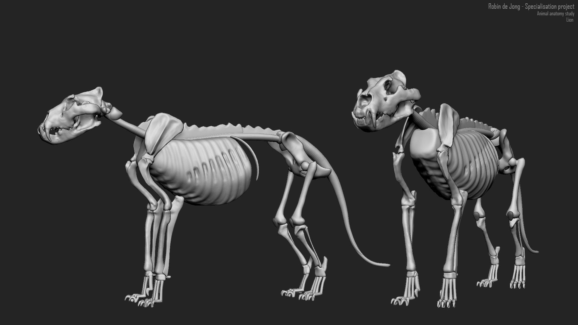 Robin De Jong Anatomy Studies