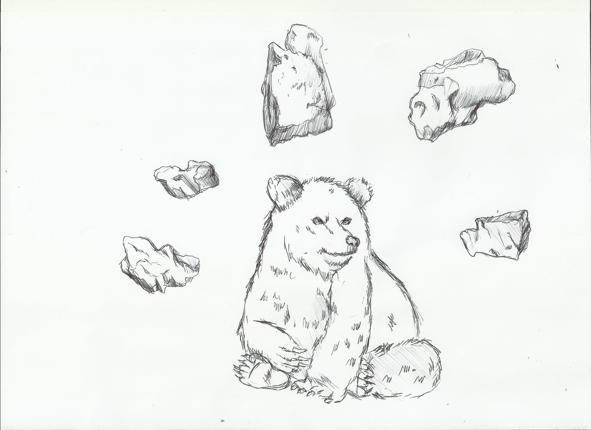 Ali maher bear cub and flying rocks