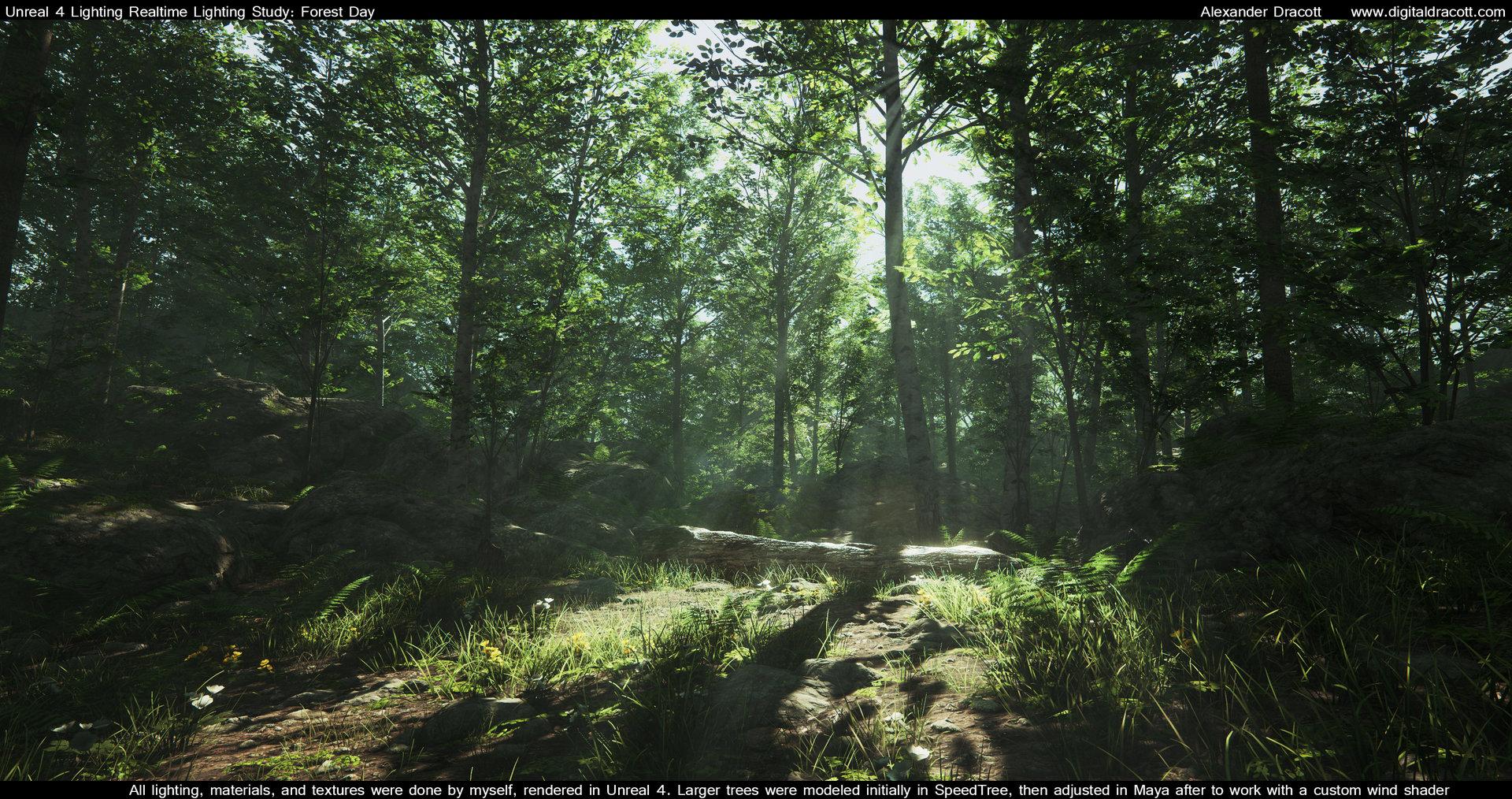 Alexander dracott forest 001