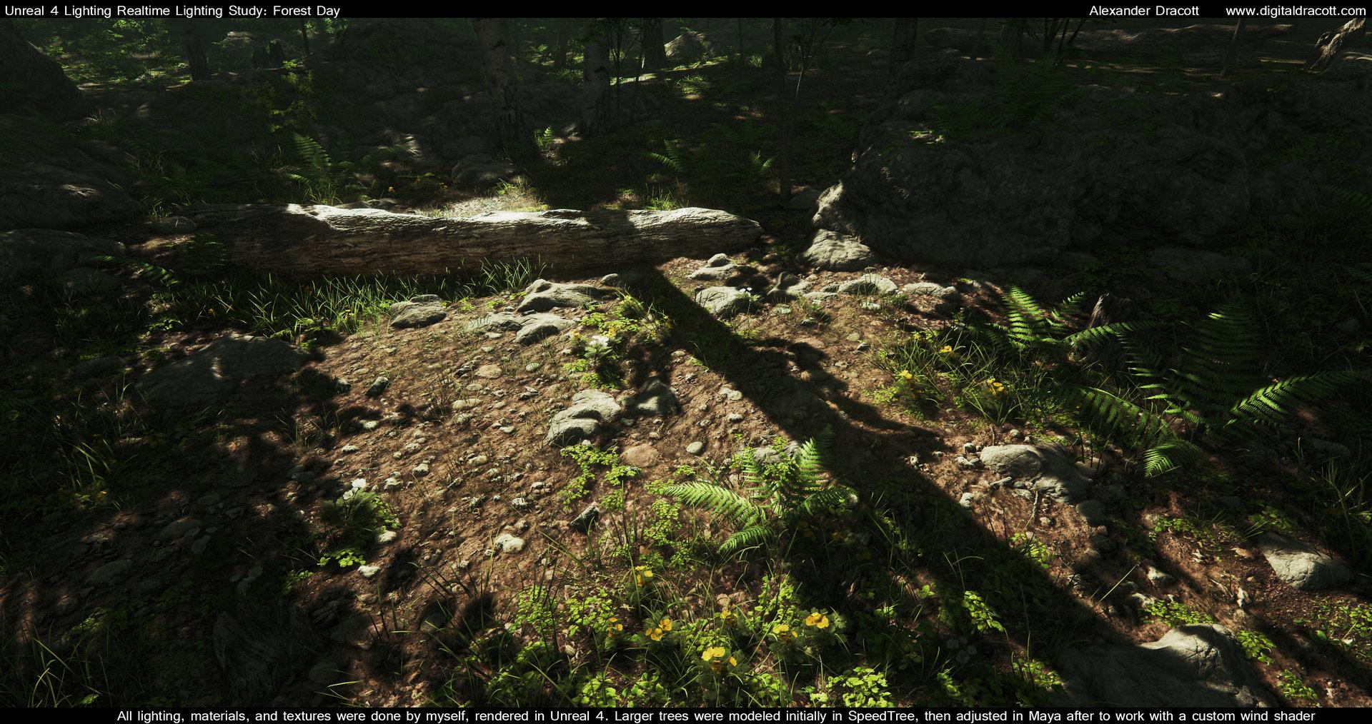 Alexander dracott forest 002
