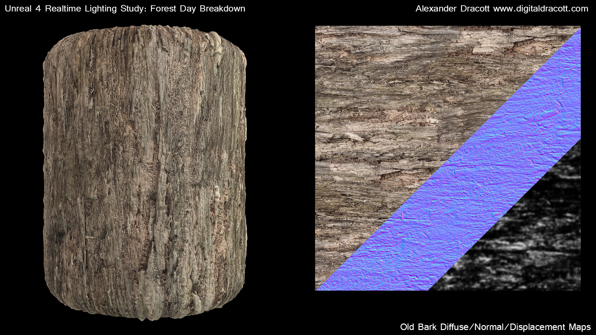 Alexander dracott forestbreakdown textureoldbark