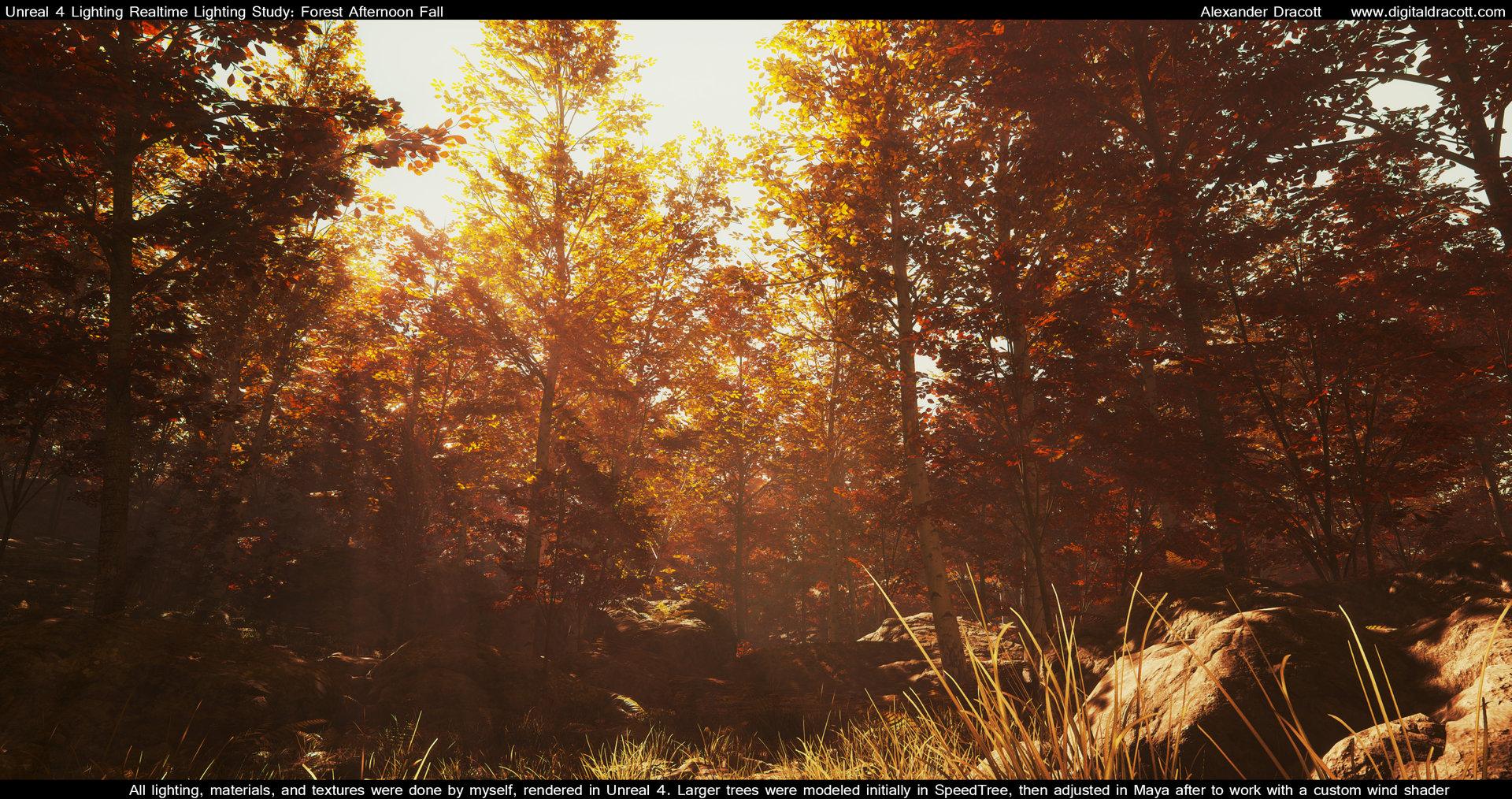 Alexander dracott forest 004