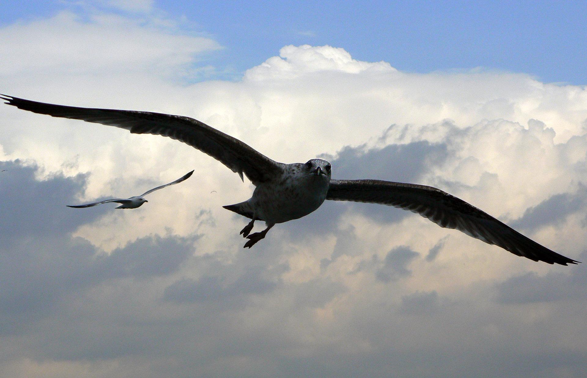 Nikolaos maragkos seagulls 003