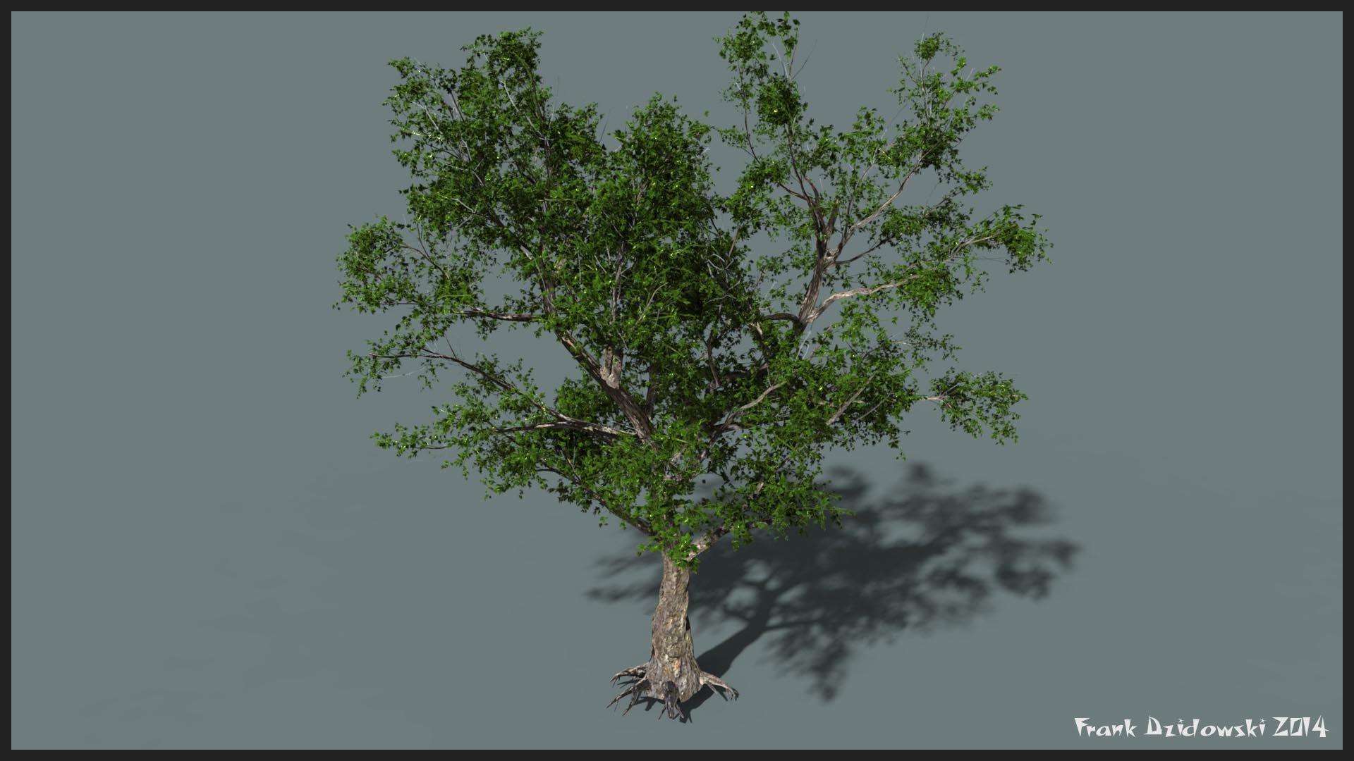 Frank dzidowski bcr tree v001
