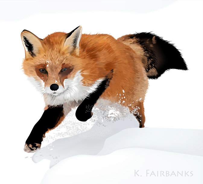 Digital drawing of a fox by K. Fairbanks