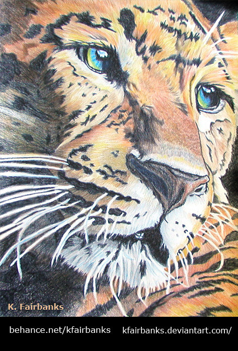 Leopard (pencil drawing) by K. Fairbanks