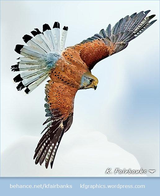 Flight (vector drawing of a bird) by K. Fairbanks