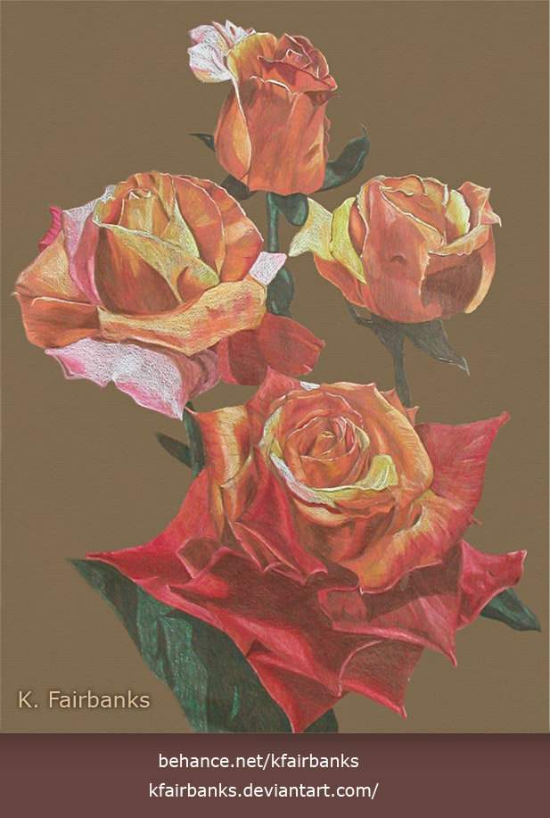 Roses (color pencil drawing) by K. Fairbanks