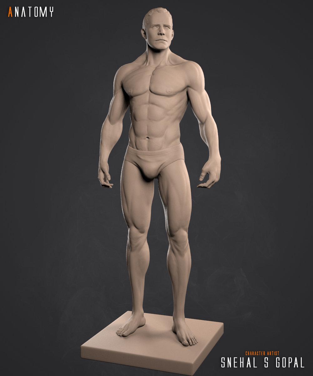 Snehal s gopal anatomy clay front01