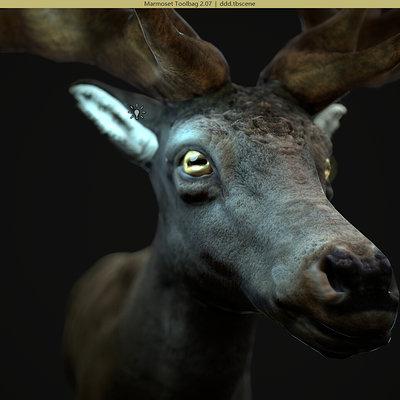 deer_test _1