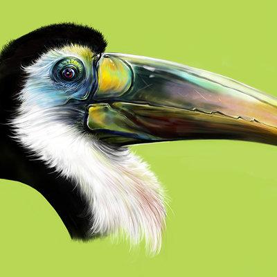 Josiah herman toucan