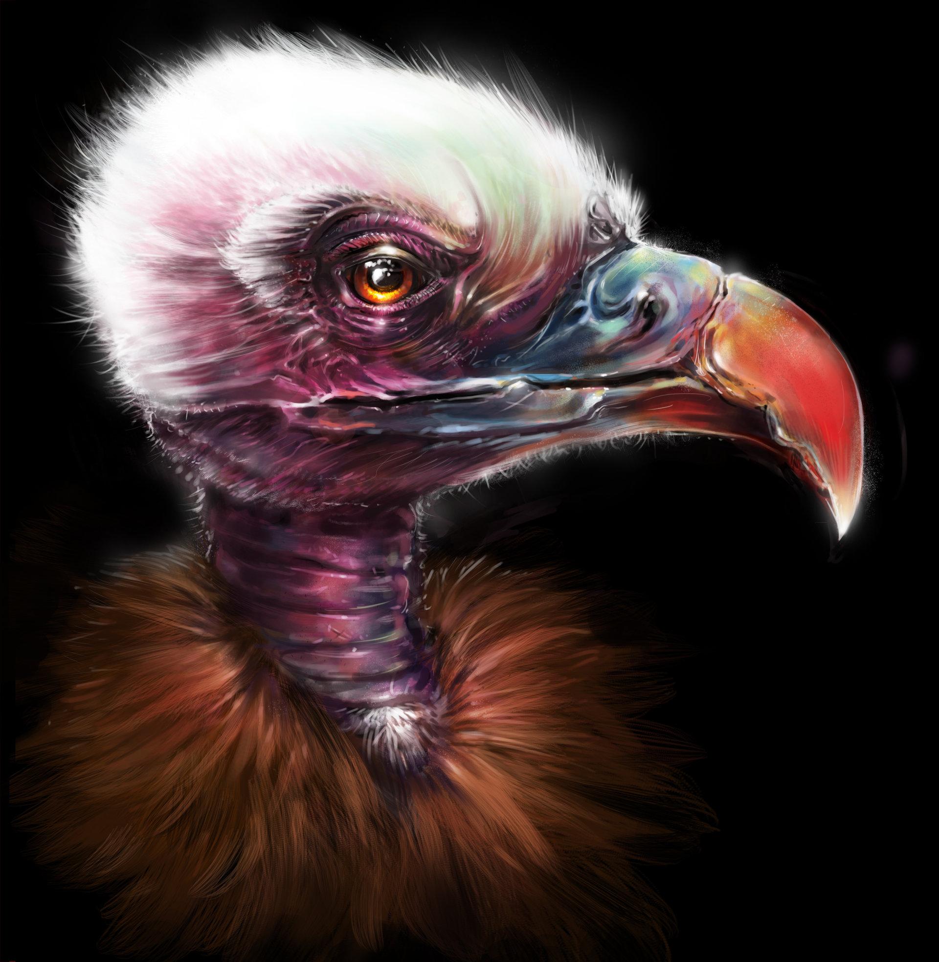 Josiah herman vulture copy