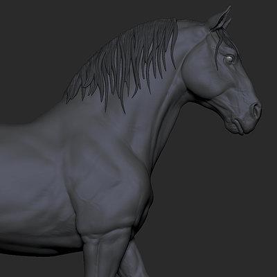 Horse study 2015