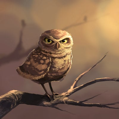 Daniel bogni video owl by danielbogni d86xyfd