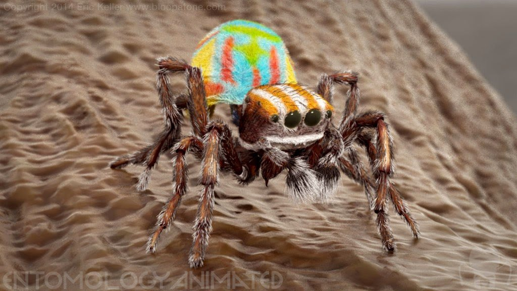 Eric keller peacockspider test render03
