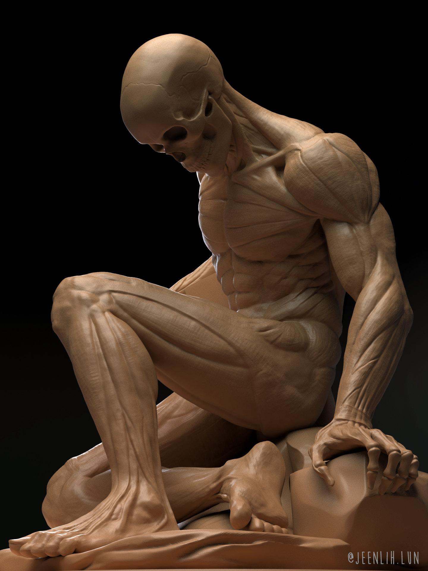 Jeen lih lun anatomy closeup