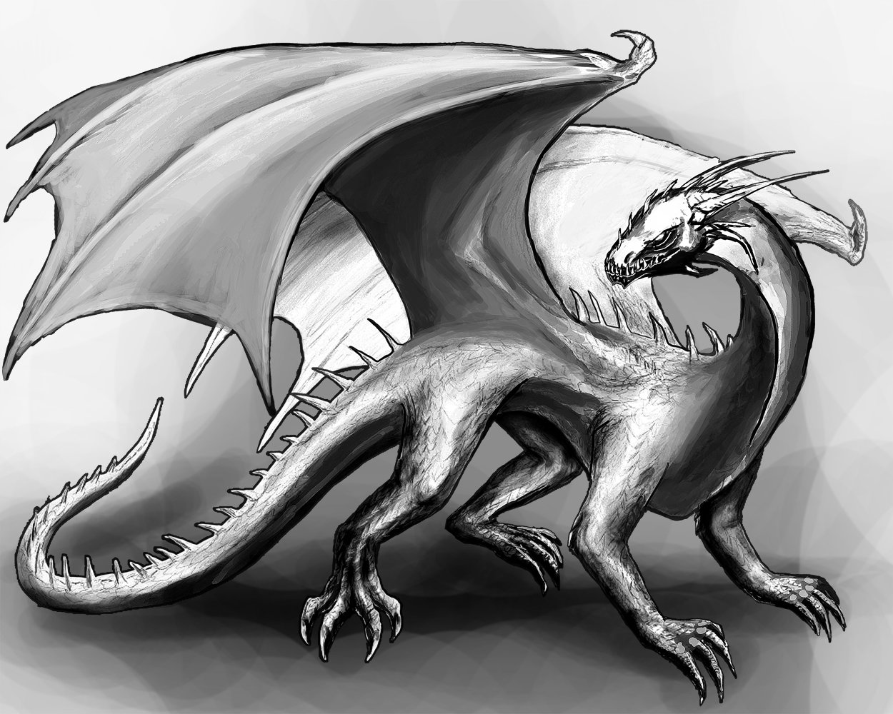 Orm irian black and white dragon by catharinawendland