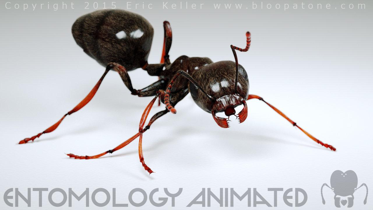 Lovely ant