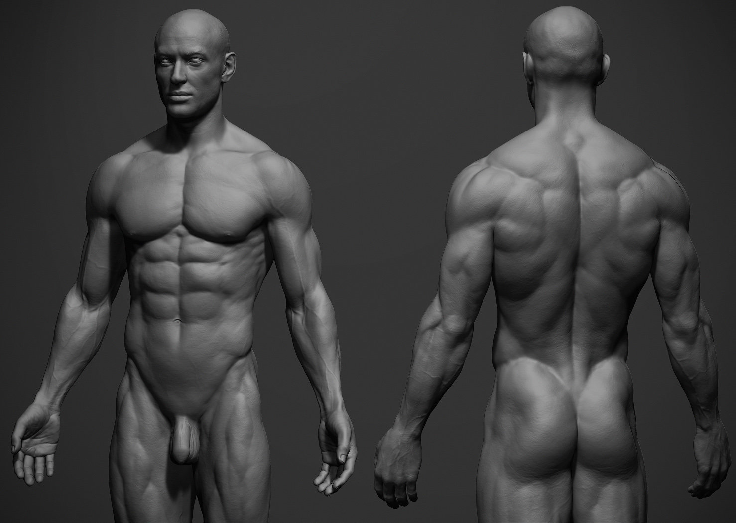 ArtStation - Male Anatomy Ref, adam skutt