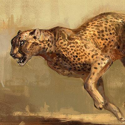 Jonathan kuo cheetah7