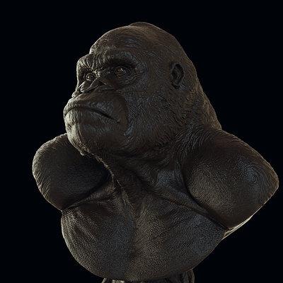 Gorilla study fast Keyshot renders