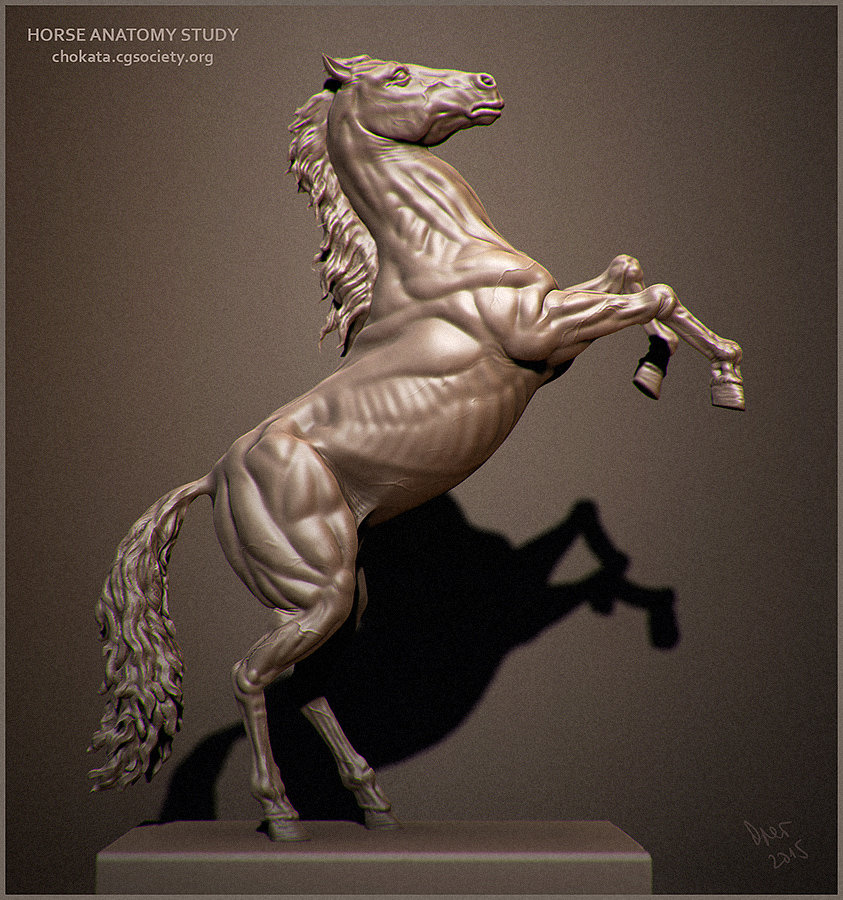 Modern 3d Horse Anatomy Pictures Anatomy And Physiology Biology
