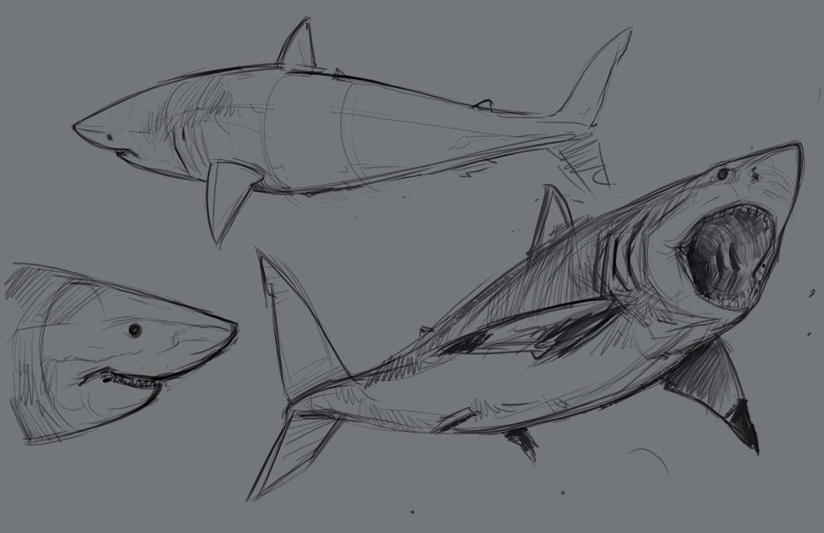 Jonathan kuo shark1