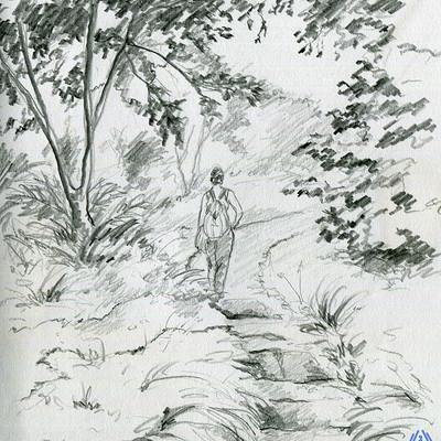 Sol all bosque