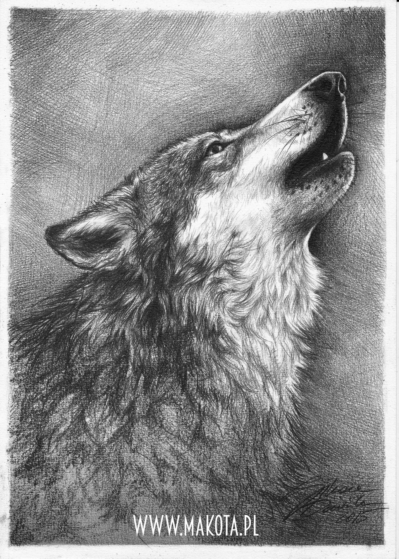 Dominika sikora howling wolf makota
