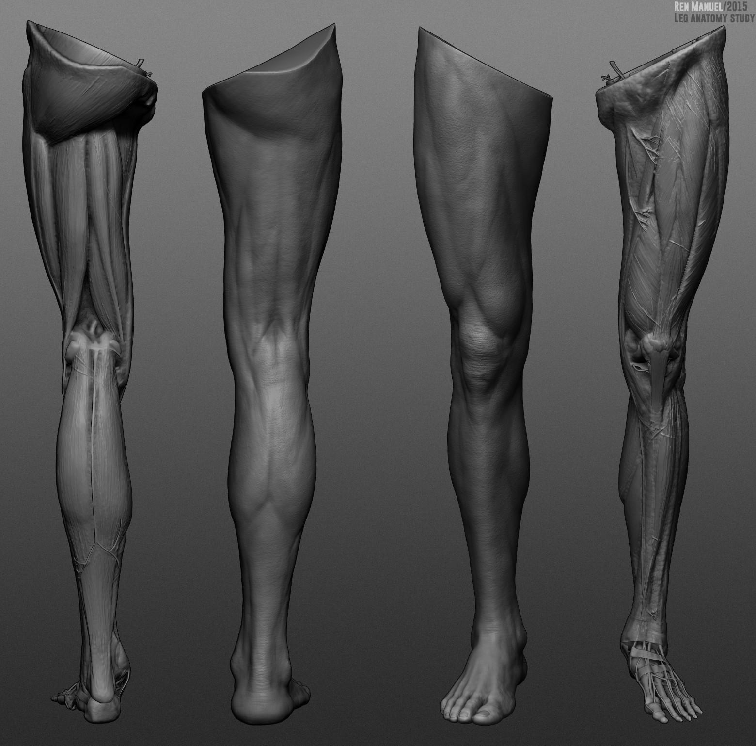 Artstation Leg Anatomy Study Ren Manuel