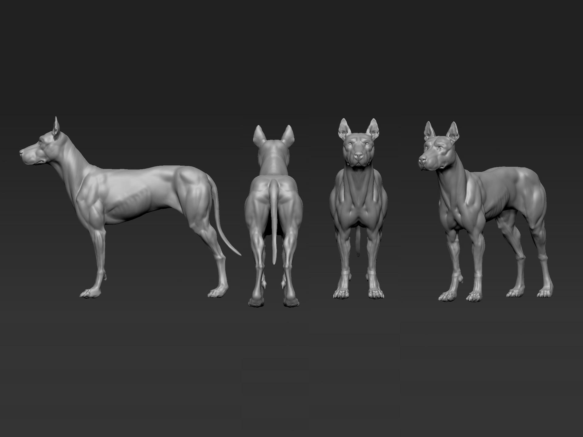 ArtStation - Dog Anatomy Study, Genesis Asis