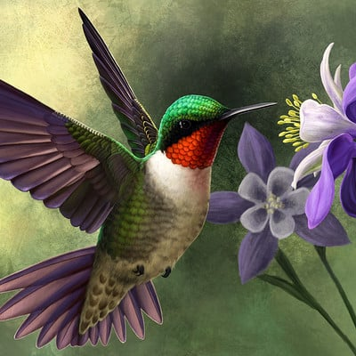 Martina nachazelova ruby throated hummingbird25